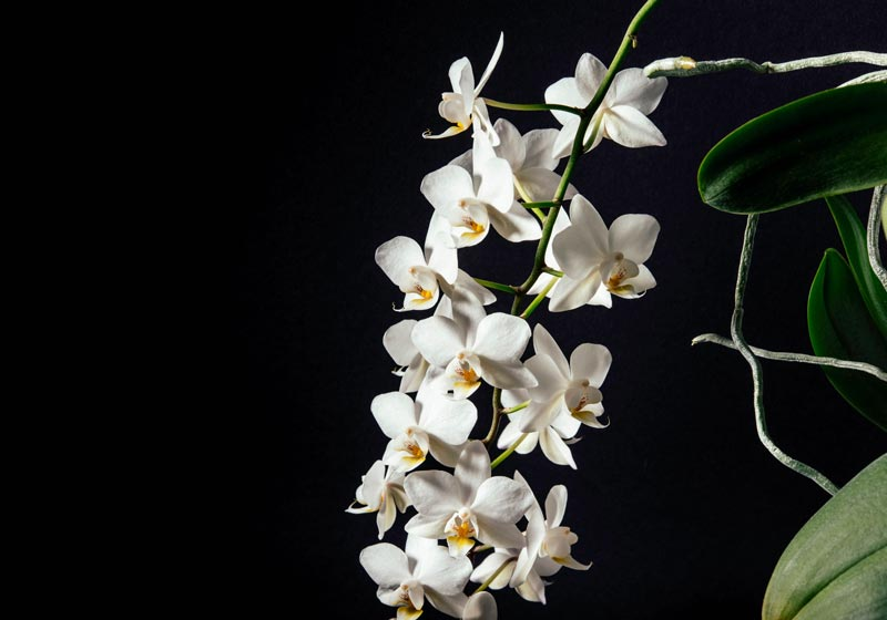 Learn the five emotional signs that your loved one may exhibit when nearing death.